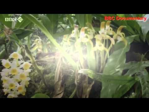 BBC Documentary: Life (BBC 2009) Plants - David Attenborough Discovery Channel…
