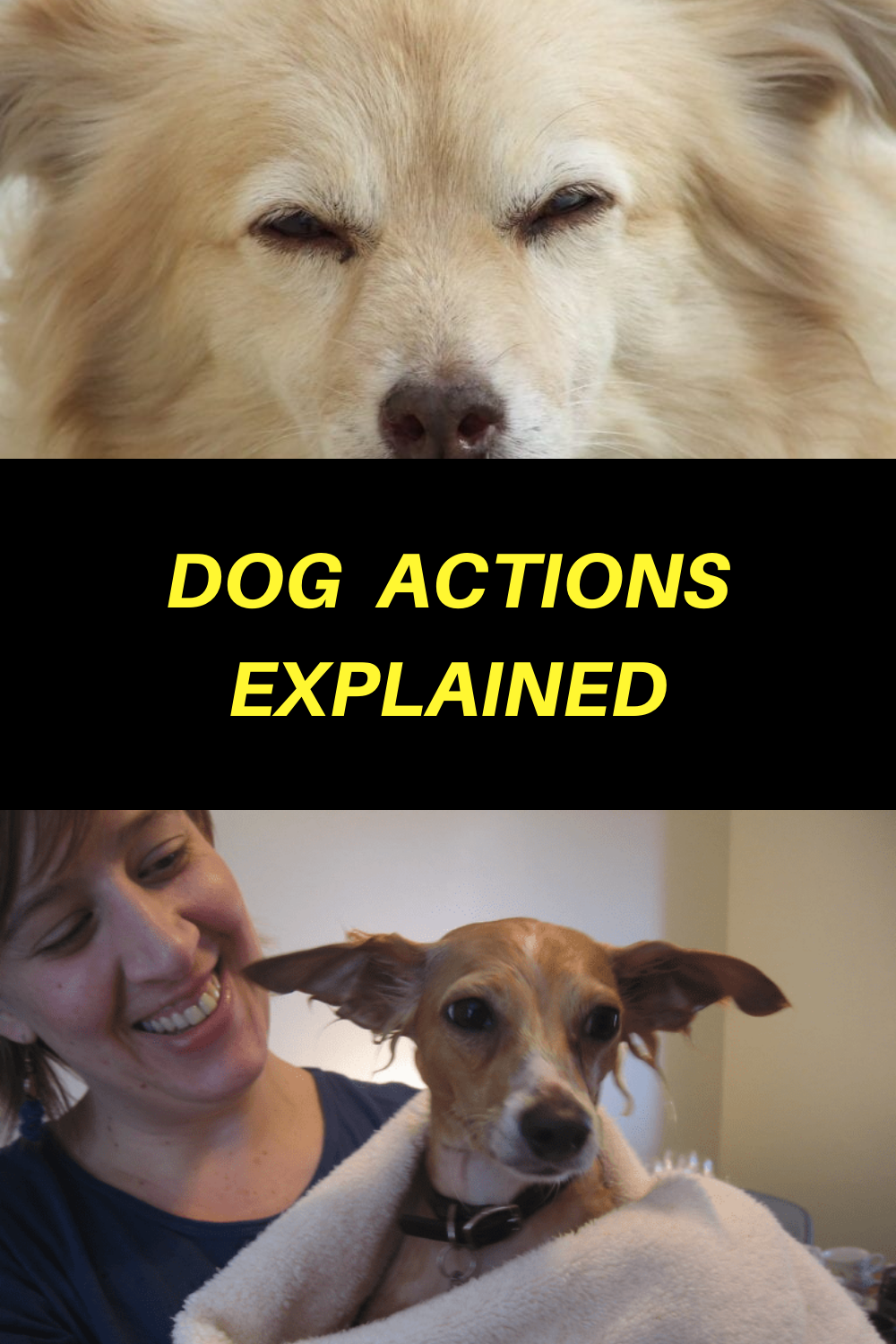 What It Means When Your Dog Follows You Into The Bathroom And Other Dog Actions Explained In 2020 Dogs Your Dog Dog Life