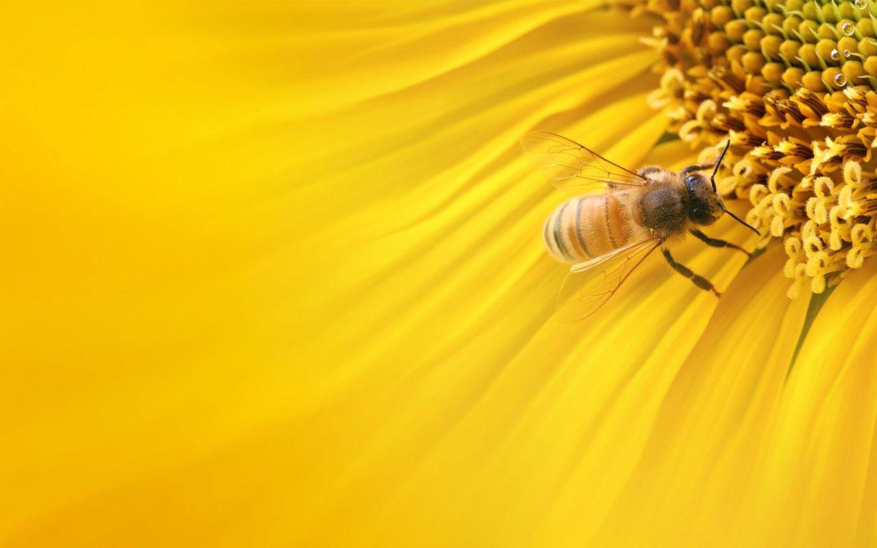 Illustration Bee Wallpaper Stock Vector Shutterstock 1680