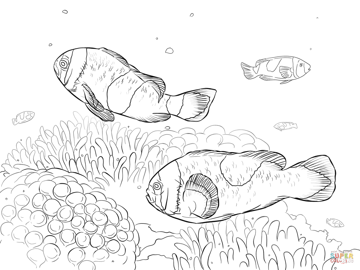 Saddleback Clownfishes Coloring Page From Clownfish Category Select 26077 Printable Crafts Of Cartoons Nature Animals Bible And Many More