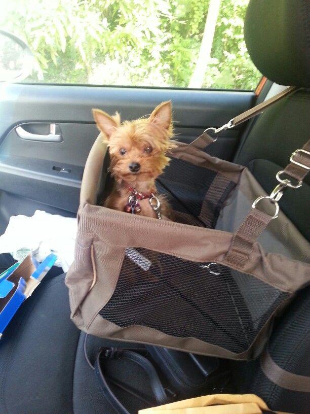 Car Seat Yorkie