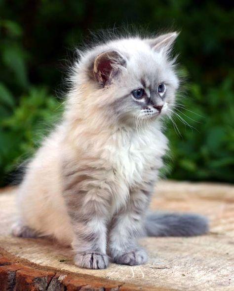Fluffy kitten #funnykittens