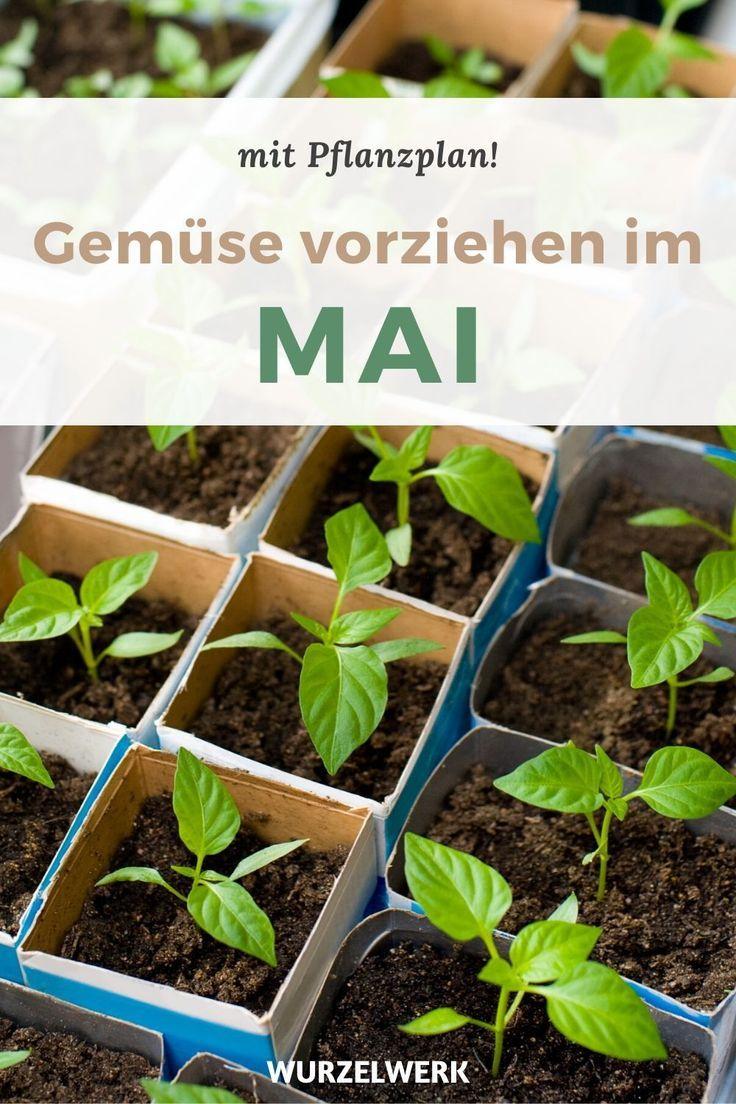 Aussaat & Pflanzen im Mai – mit Pflanzplan!