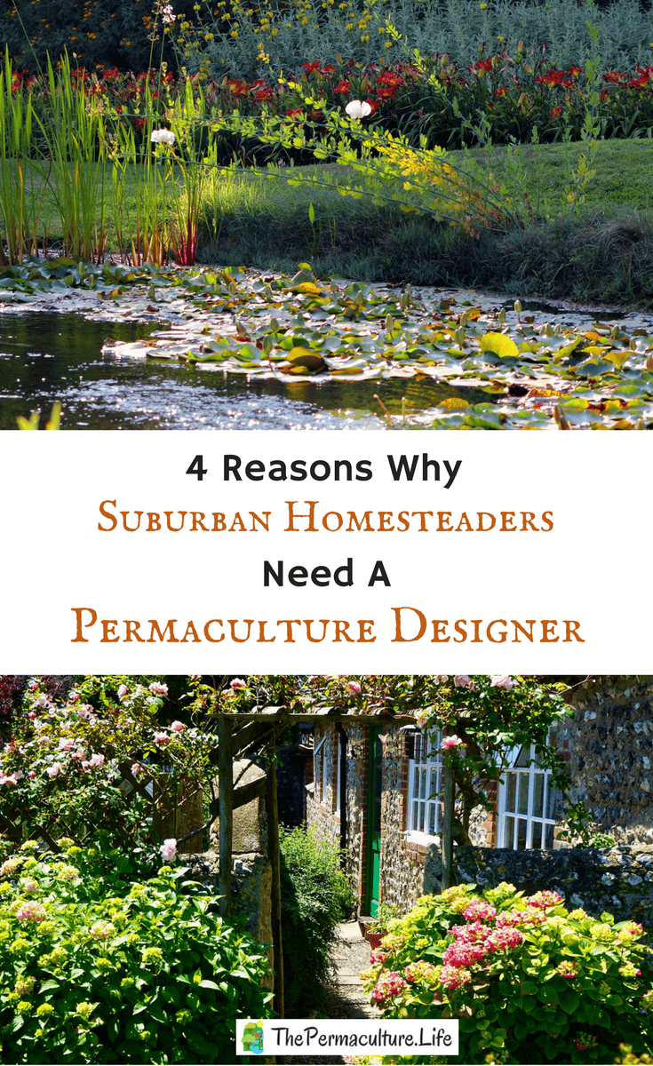 4 reasons why even backyards need a permaculture designer