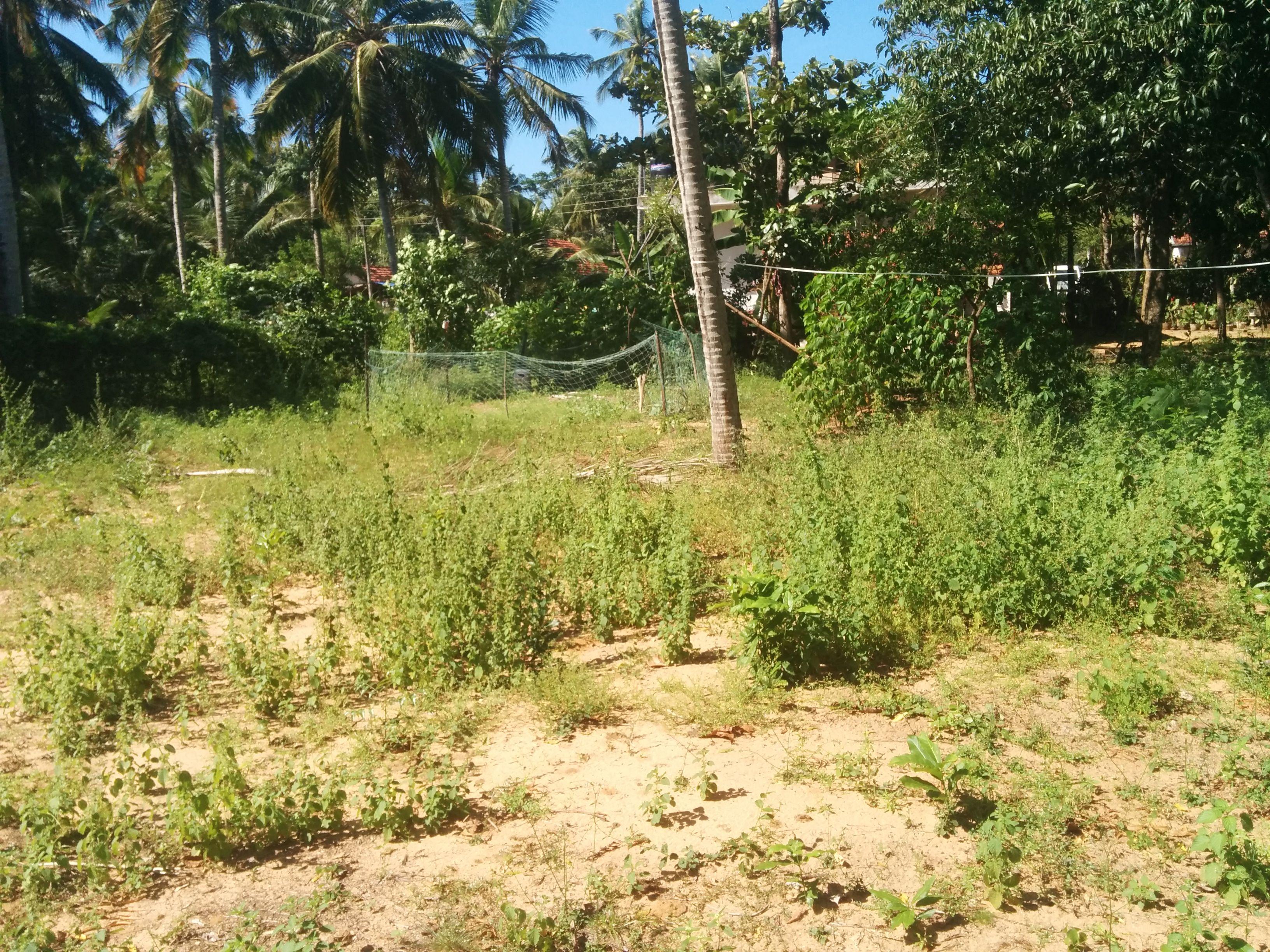 Land For Sale In Negombo Welihena Real Estate Visit Sri Lanka Https Visitsrilanka Com Property Properties Land F Negombo Land For Sale Beautiful Places