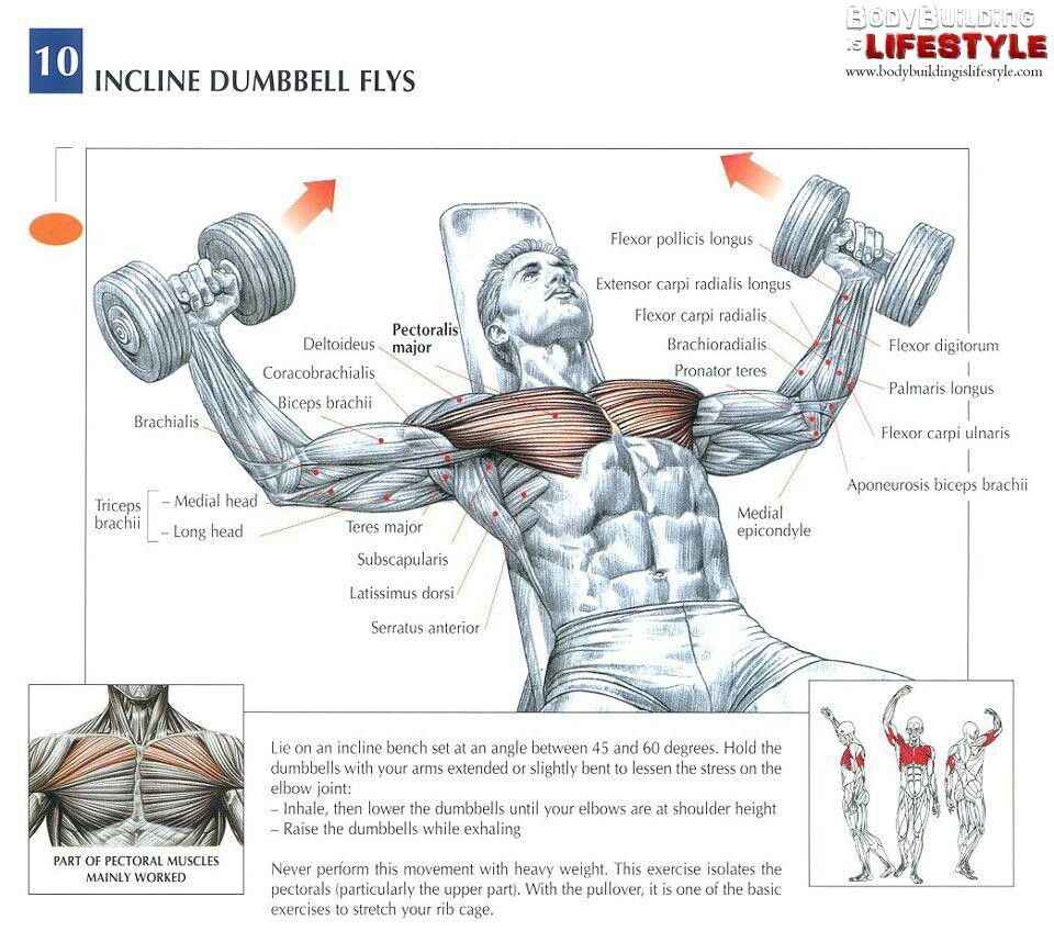 Incline Dumbbell Flys Health And Fitness Exercise
