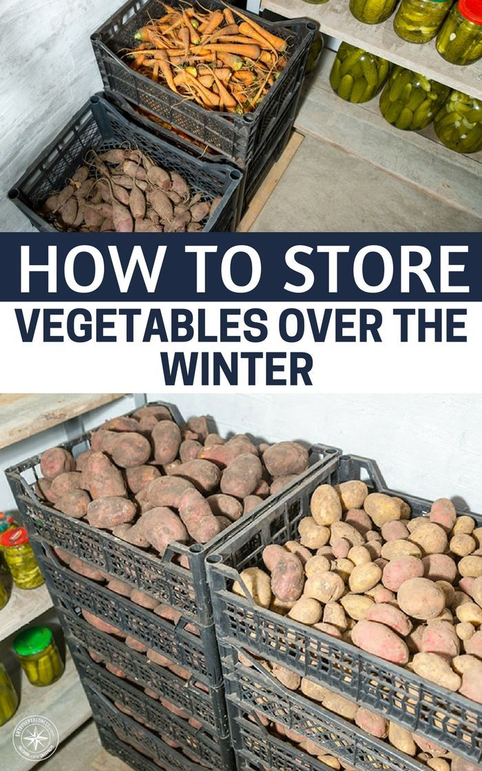 How to Store Vegetables Over the Winter - Modern and Vintage Storage Tips - SHTFPreparedness #greenthings