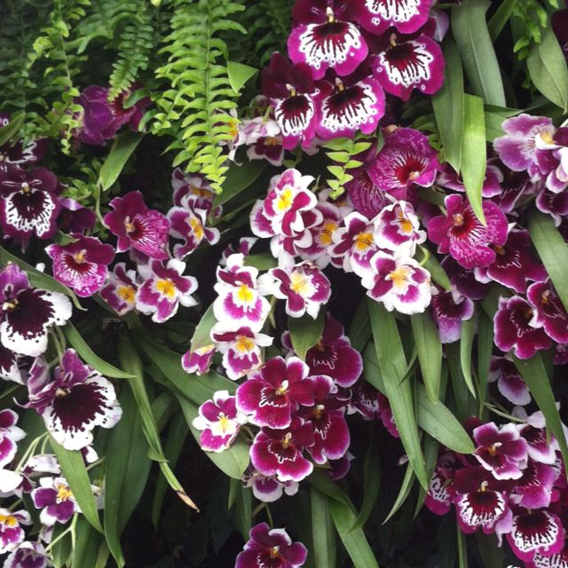 NY Botanical Garden Orchid Show. Bravo Patrick Blanc!! Photo by Jennifer Hausler