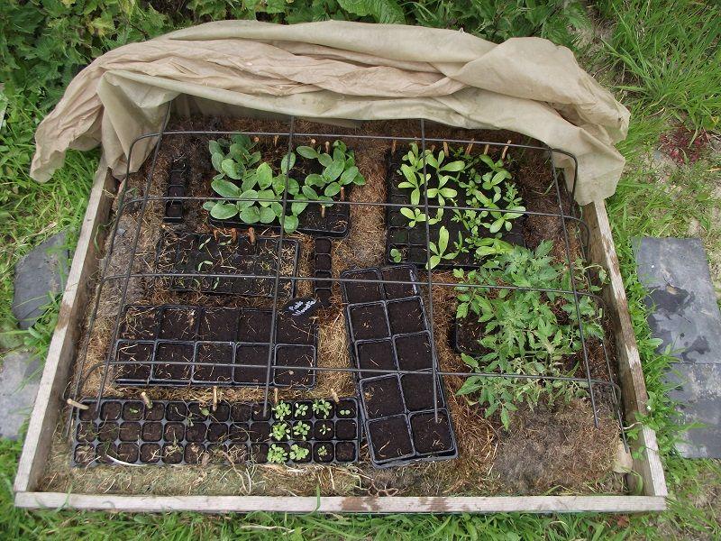 Notre premi re mini serre semis avec une couche chaude tonte d 39 herbes nous nous sommes - Fabriquer une mini serre pour semis ...
