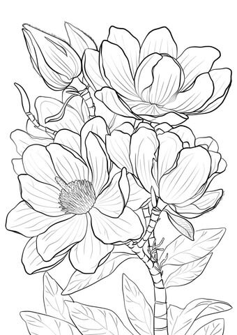 Campbells Magnolia Coloring page March holiday