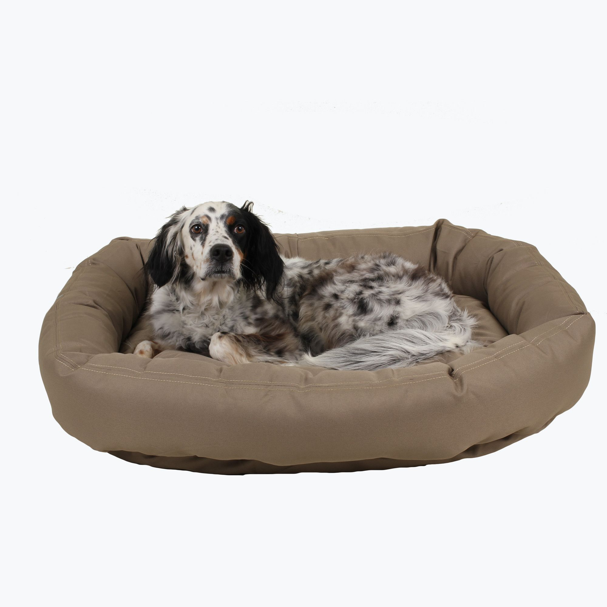 Brutus Tuff ChewResistant Donut Dog Bed in 2019 Dog bed