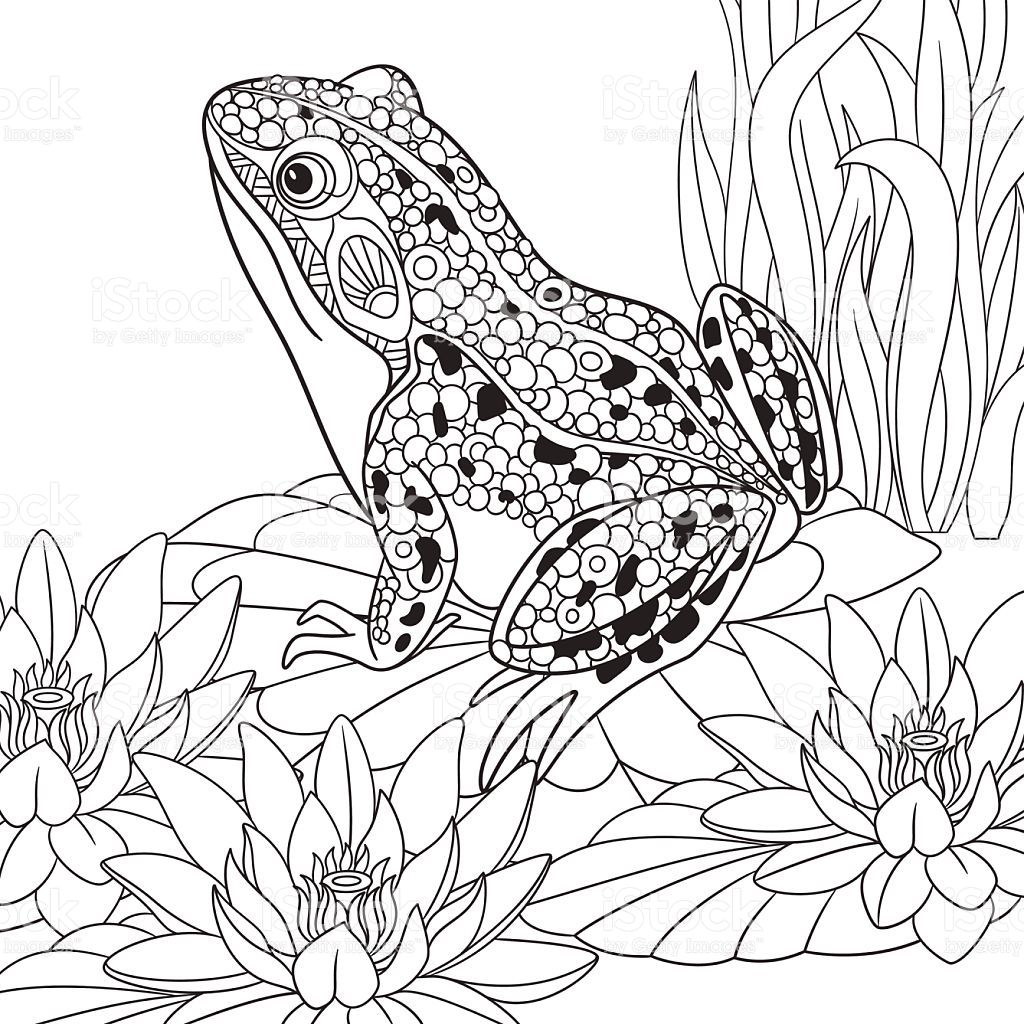 Hand Drawn Stylized Cartoon Frog Sitting Among Lotus Flowers Malvorlagen Tiere Malvorlagen Tiere Malen