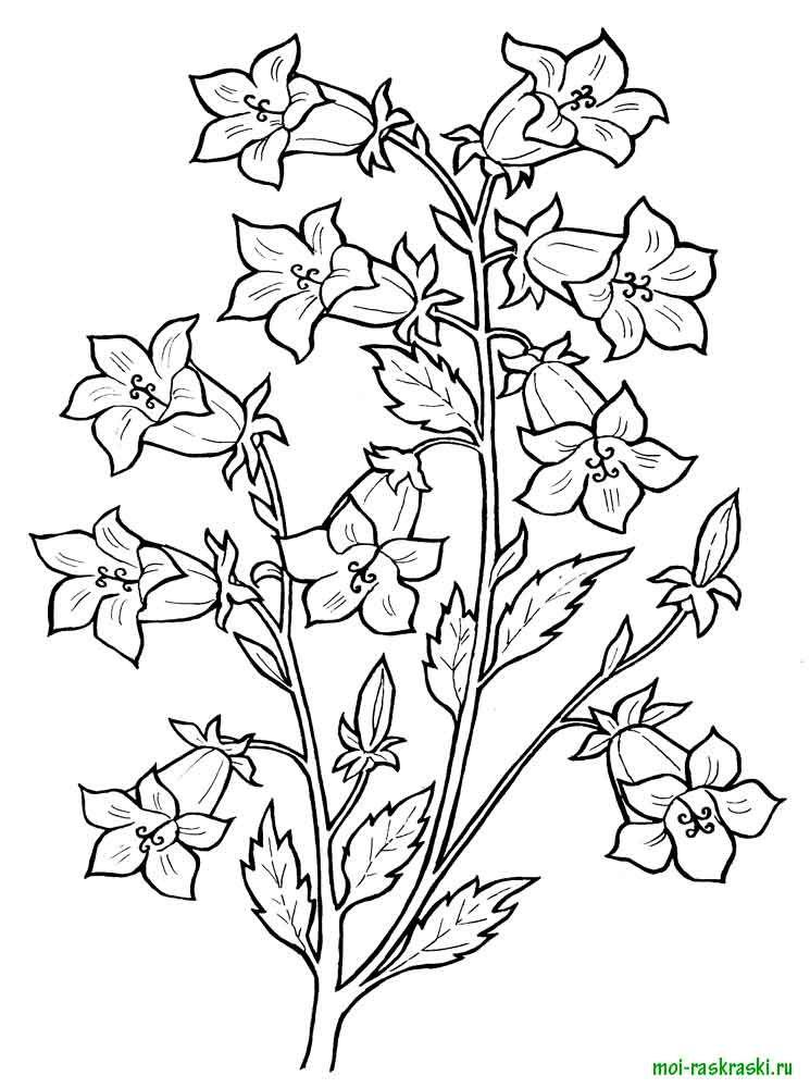 Раскраски цветы колокольчики. Скачать и распечатать ...