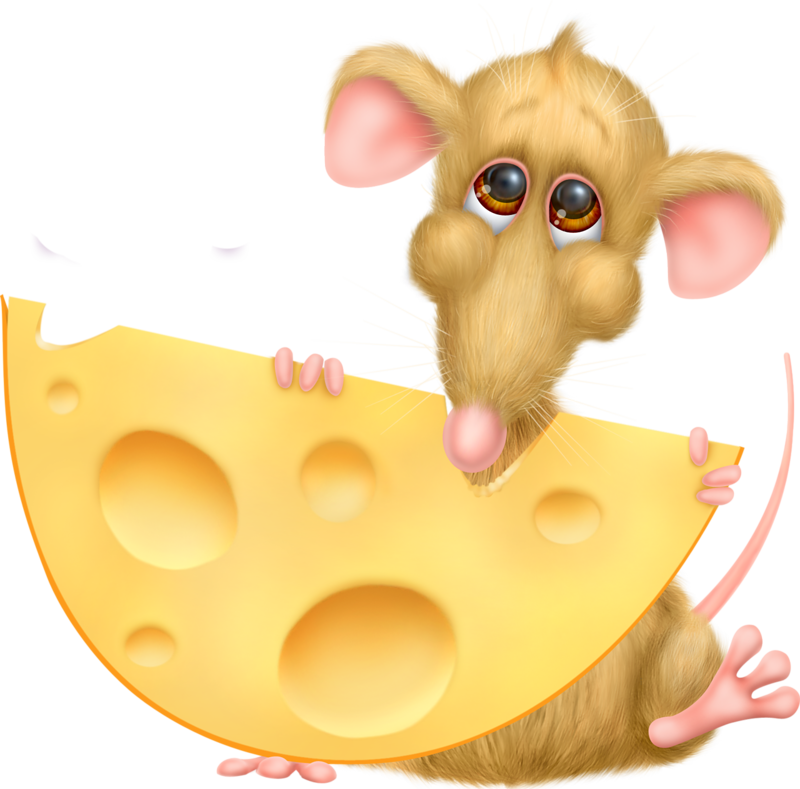 Сыр прикольные картинки