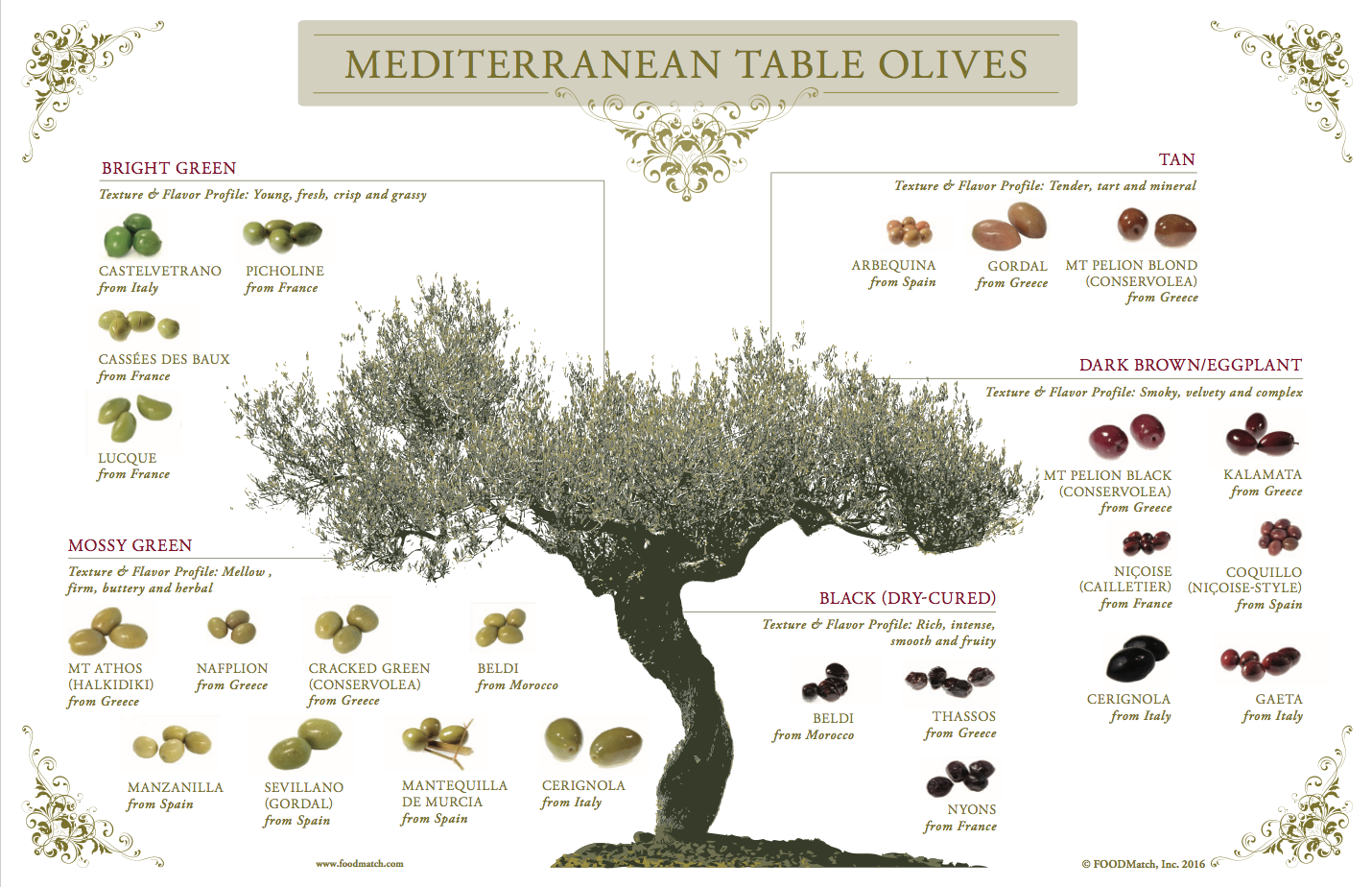Image result for Castelvetrano olive tree Olive tan