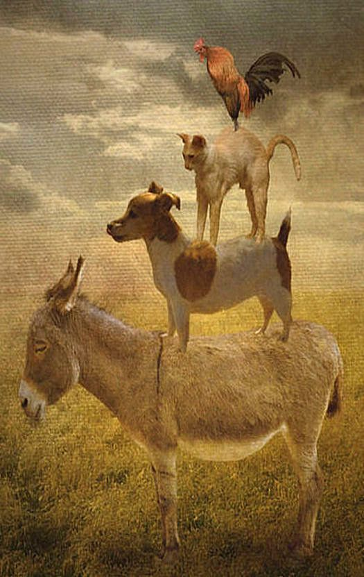 Donkey Dog Cat Amp Rooster Donkey Cool Pets Animals Dogs