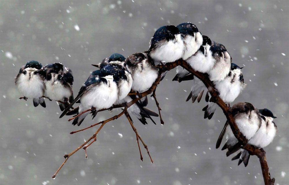 Картинки t ухаживать за птицами зимой