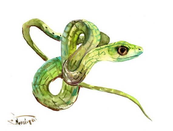 Snake Original watercolor painting green snake by ...
