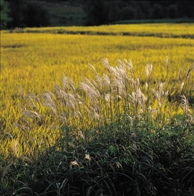 The Best Grass Seed For Sandy Soils In Michigan Best Grass Seed Sandy Soil Grass Seed