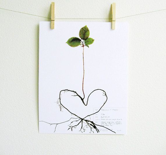 PRINT of Framed Sweet Cherry Tree Herbarium Specimen, Heart Shaped Roots,Pressed Botanical Art, Tree Sapling, Scientifc Wall Art, Botany Art on Etsy, $10.00