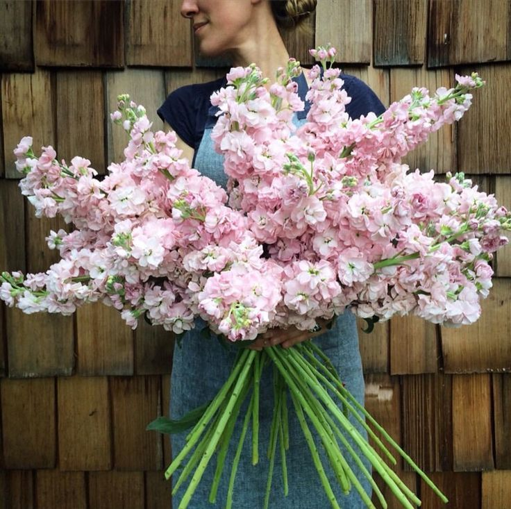 Beautiful stock flower bouquet pictures inspiration images for flower farms harvest of pink stock flowers the bouquet mightylinksfo Gallery