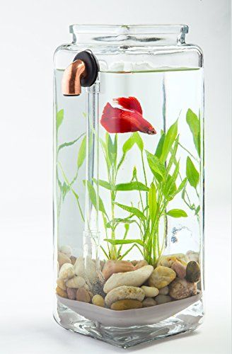 Robot Check Cleaning Glass Betta Aquarium Betta Fish