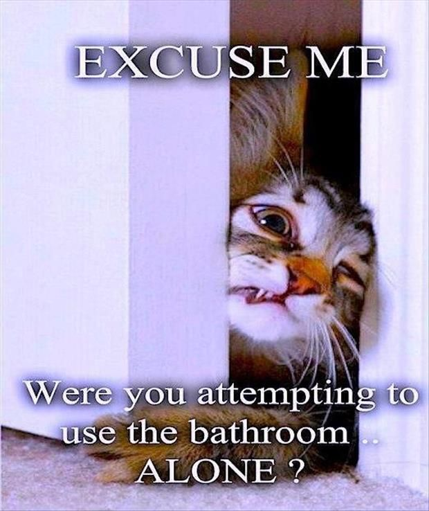Cats Dogs Kids The Husband When Was The Last Time I Went To The Bathroom Alone Or Without Someone Checking On Me Cats Funny Animals Funny Pictures
