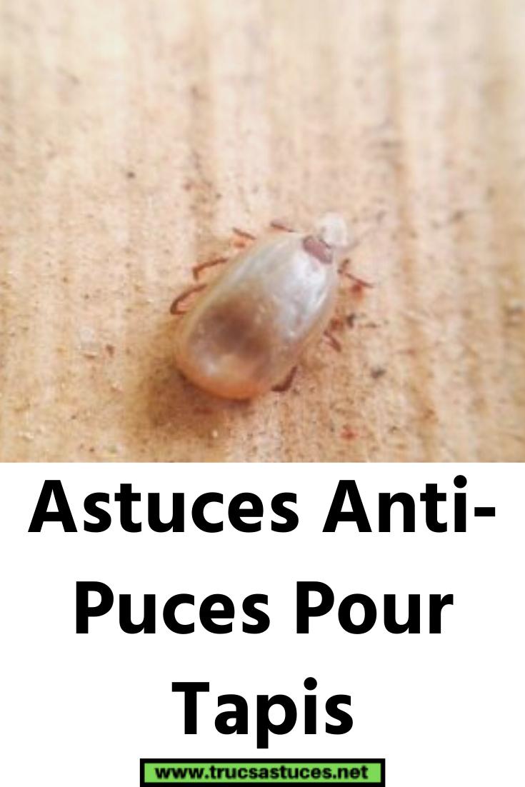 Astuces Anti Puces Pour Tapis In 2020