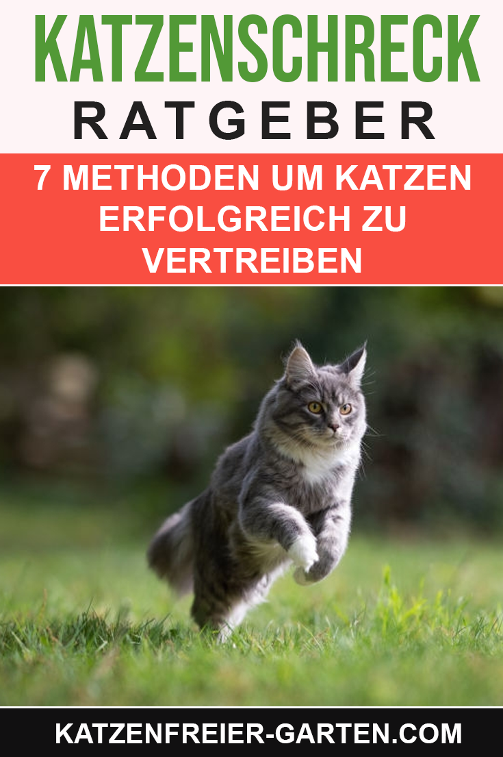 Pin Auf Katzenschreck