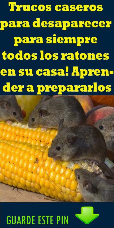 Como Acabar Con Las Ratas En El Campo Trucos Caseros Para Desaparecer Para Siempre Todos Los Ratones En