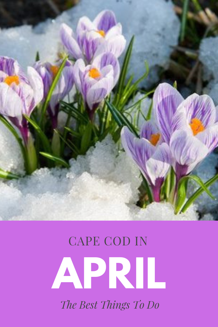 Here Are The Best Things To Do On Cape Cod In April Cape Cod Cape Cod Vacation April Vacation