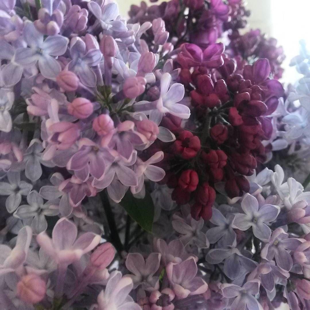 Majowy Must Have Maj Wiosna Kwiaty Bukiet Wlasny Bez Fioletowy Ogrodek Ogrod Natura Zapach May Spring F Galaxy Wedding Flowers Color Of The Year