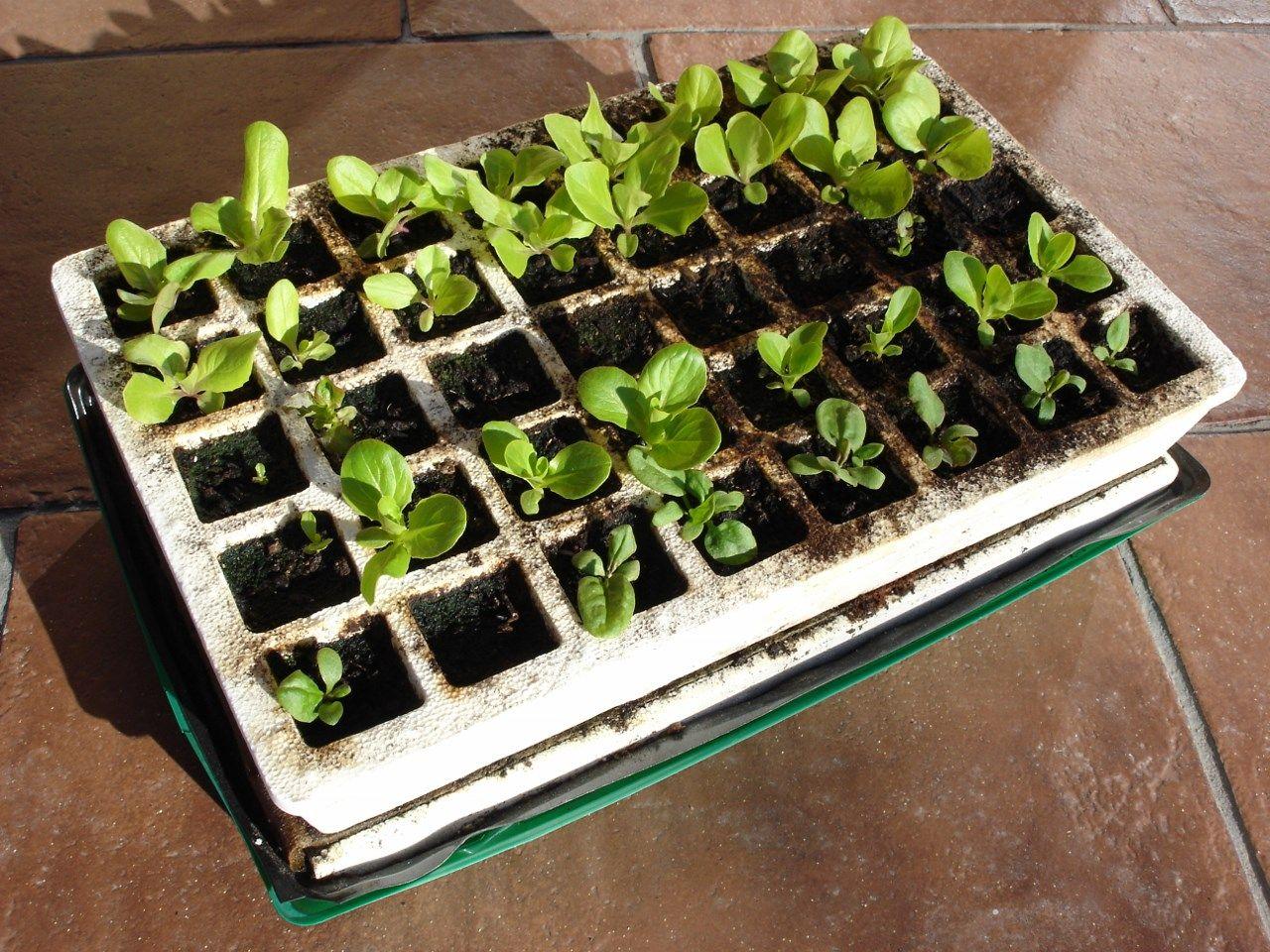 Quoi Planter Dans Une Terre Argileuse semis d'intérieur : 9 questions que vous m'avez posées