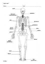 English teaching worksheets: Bones | life skills | Pinterest ...