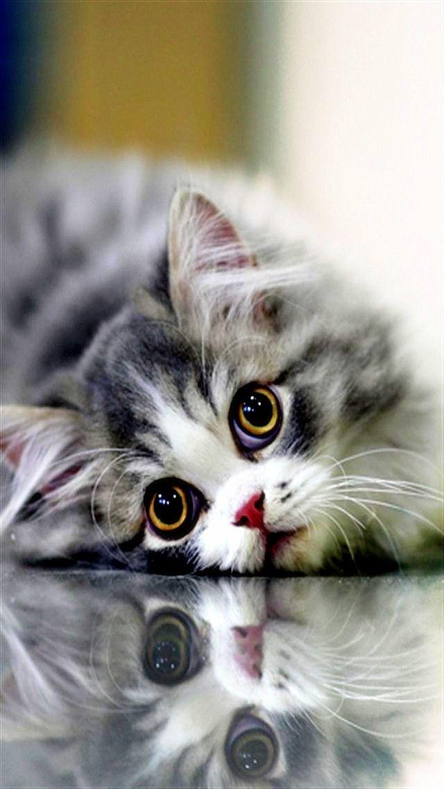 Лев, картинки с котятами я скучаю