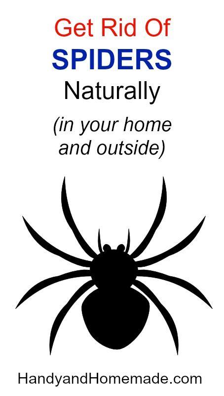32ffa7b9620a6387f64f0f0b5b026de6 - How To Get Rid Of A Spider Infestation Outside