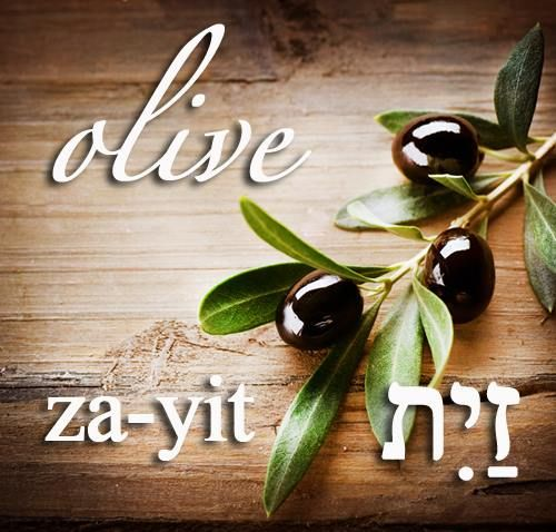 The Hebrew word of the day,  Za-Yit = Olive = זית