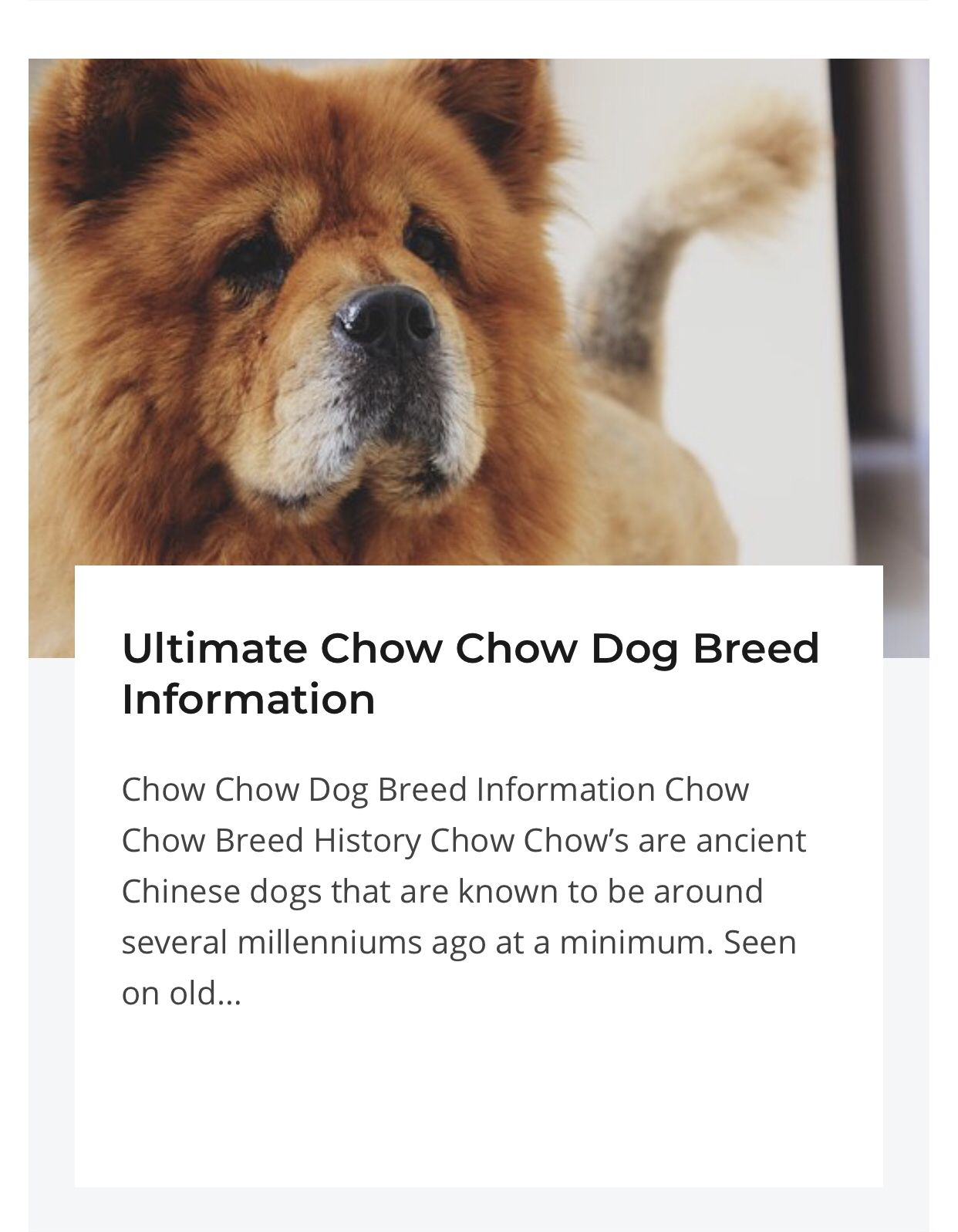Chow Puppies Blue Chow Chow Chow Chow Puppies Chow Chow Puppy Chow