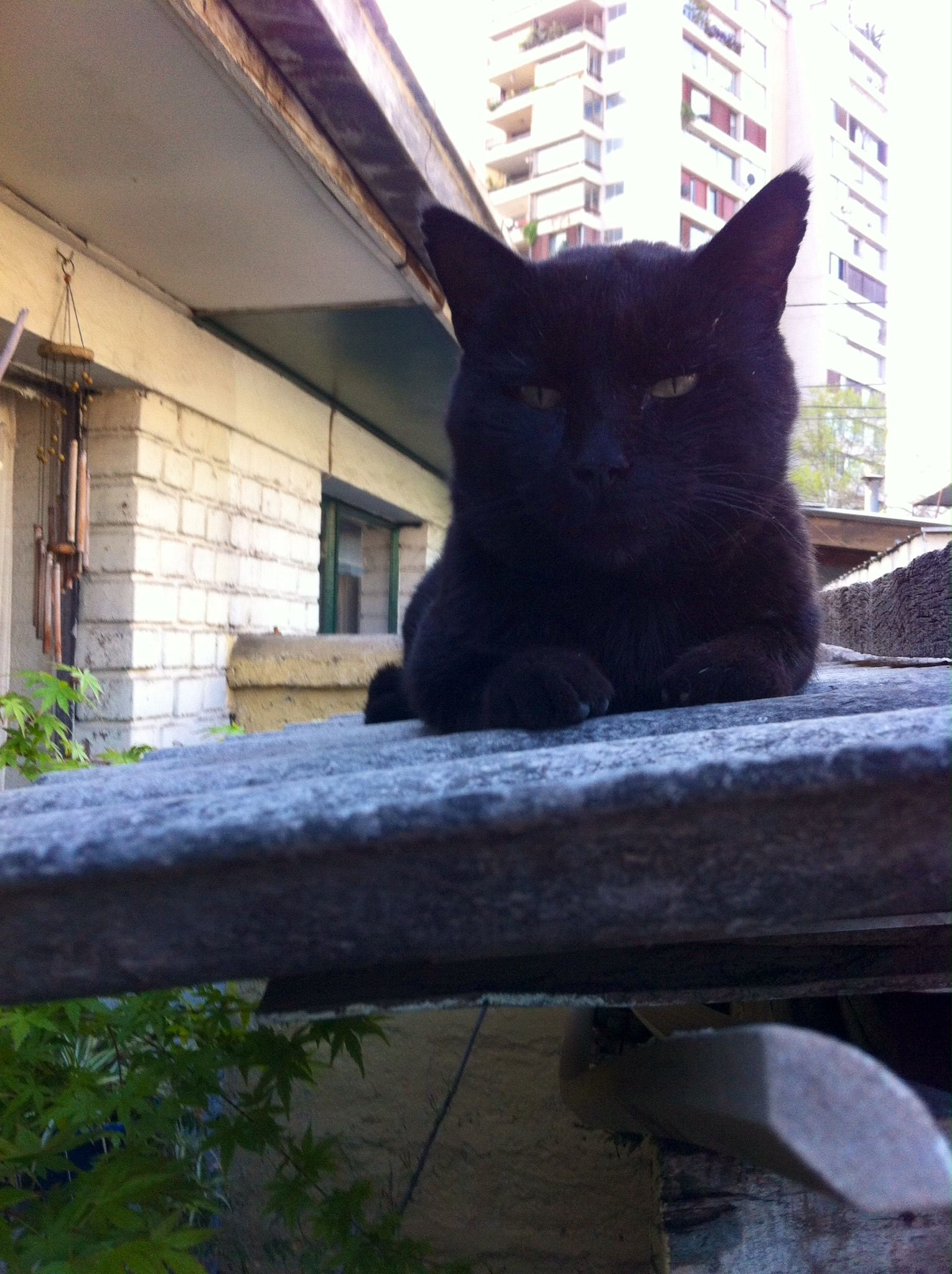Fellow Cat! My friend Gatun...