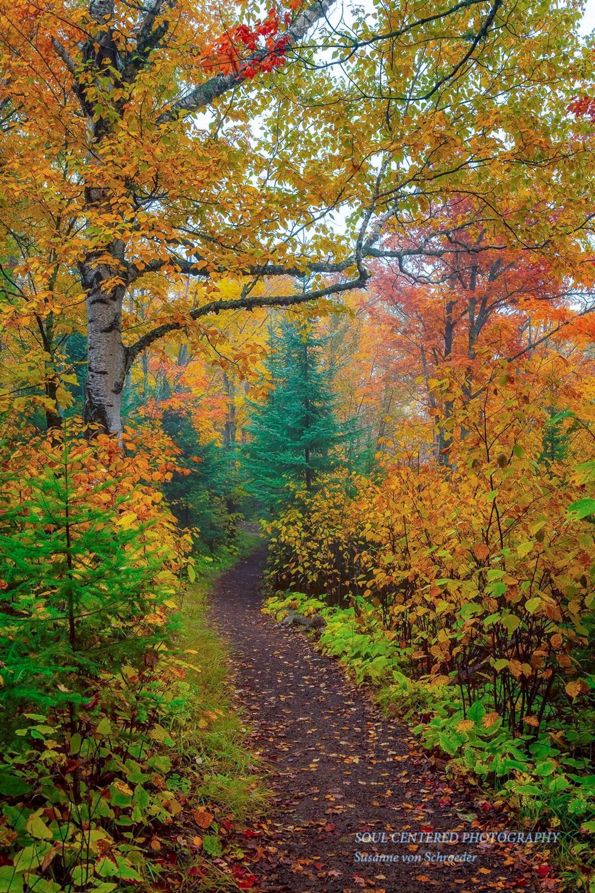 Autumn Photos Set Of 3 Prints Nature Photography Enchanted Forest Fall Colors Woodland Trail Minnesota Orange Yellow Magical Fog Fall Photography Nature Nature Photography Autumn Scenery