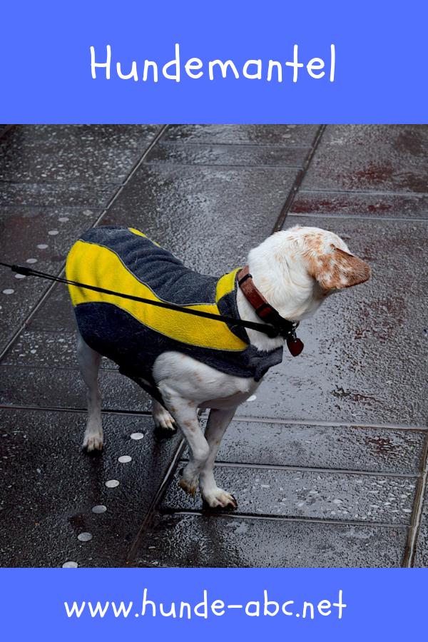 Hundemantel Kaufen Onlineshop Gunstig Kaufen 30 Rabatt Hunde Mantel Hunde Hundemantel