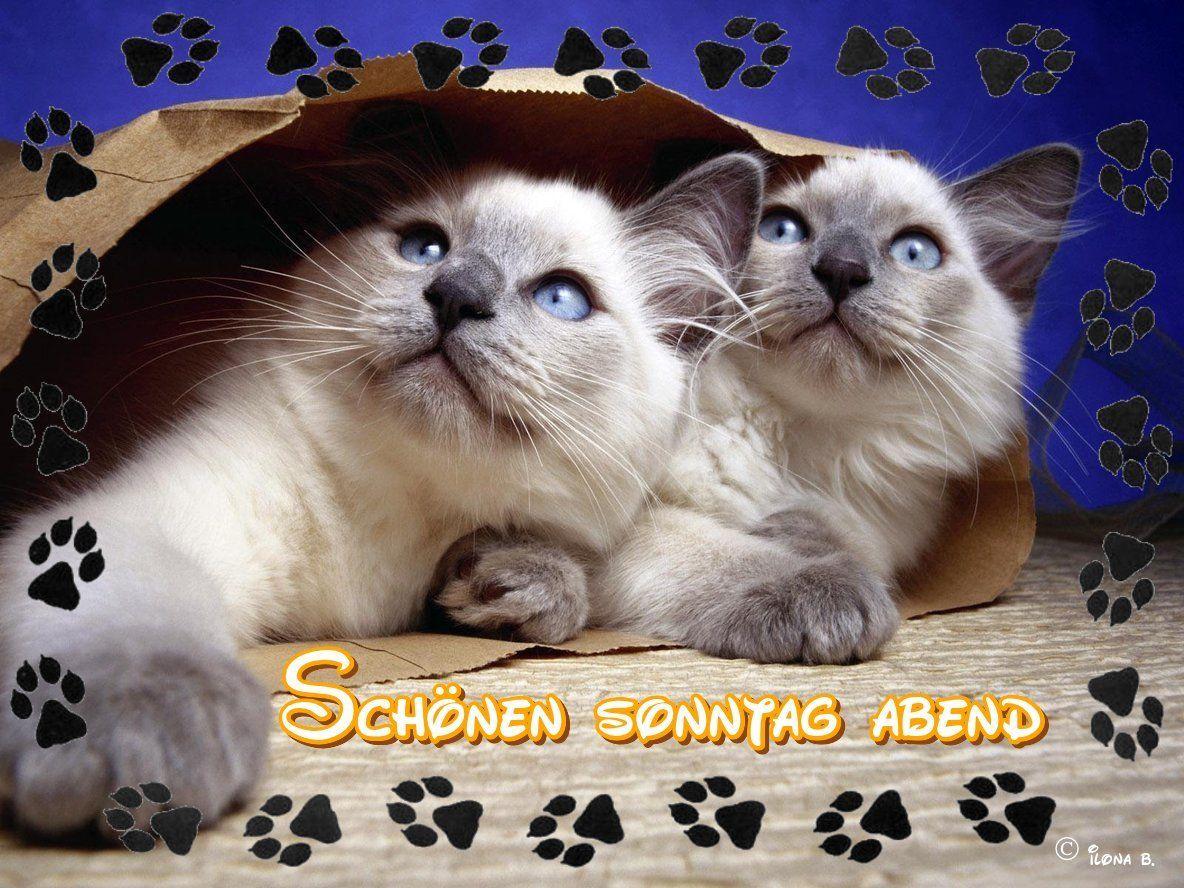 pin von ilona brandt auf sch nen abend gute nacht pinterest katzen katzen fotos und tiere. Black Bedroom Furniture Sets. Home Design Ideas