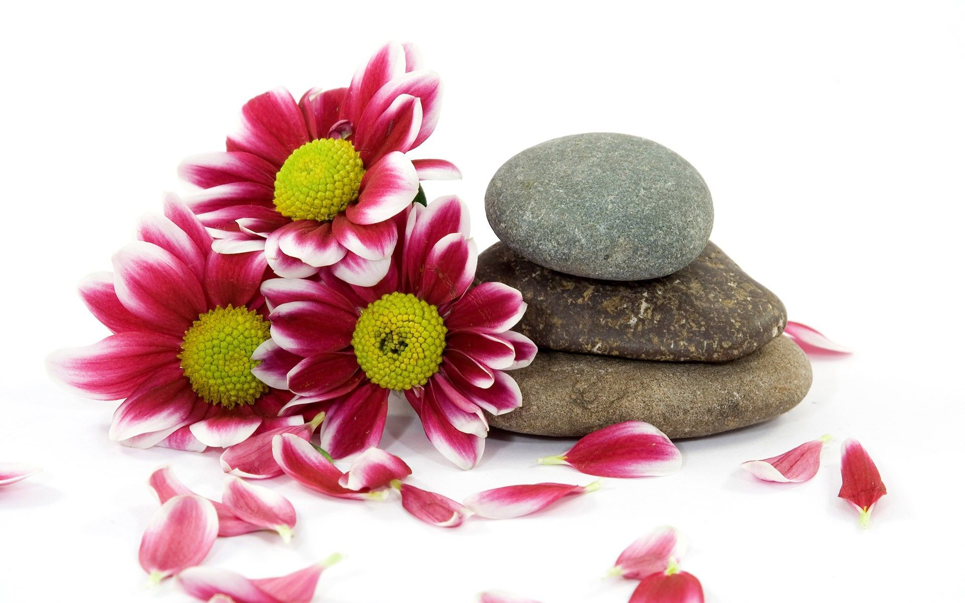 Free Screensaver Wallpapers For Still Life Stone Massage Stone Wallpaper Beauty Spa