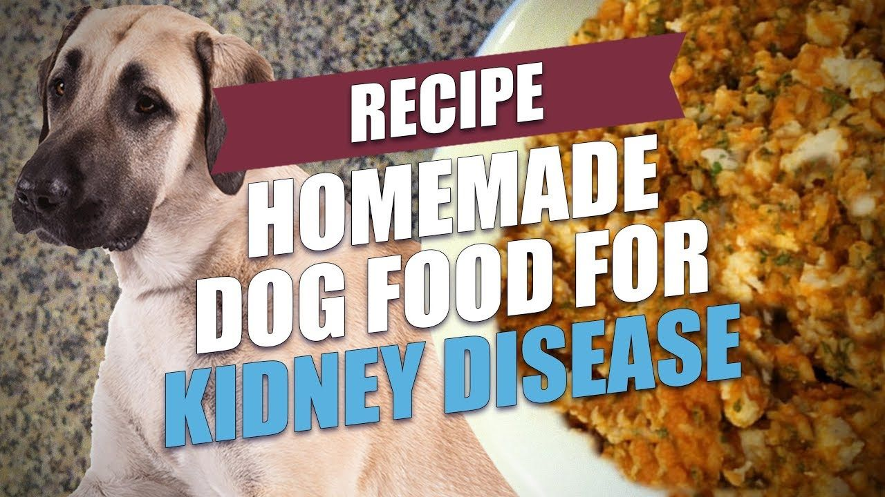 Homemade Dog Food For Kidney Disease Recipe Simple And Cheap