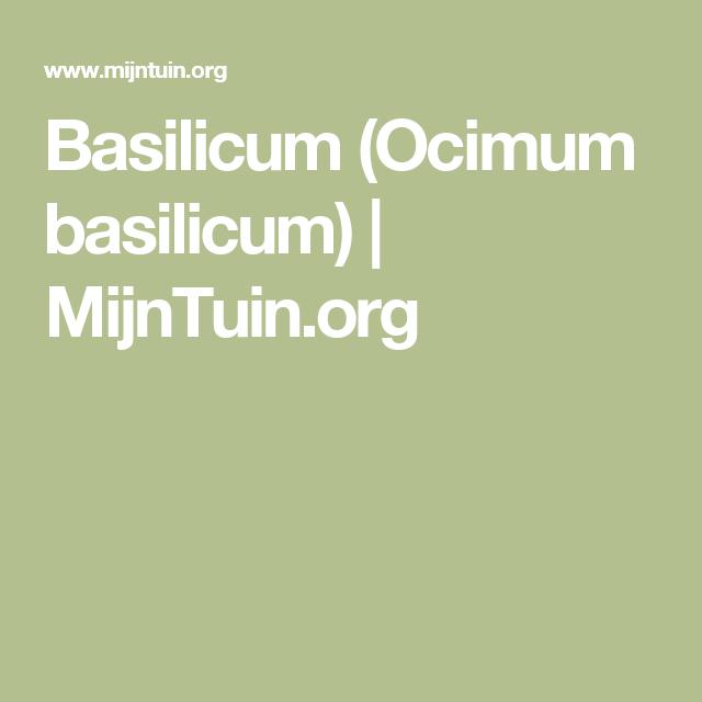 Basilicum (Ocimum basilicum) | MijnTuin.org