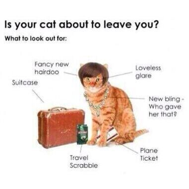 Pretty much. #lol #cats