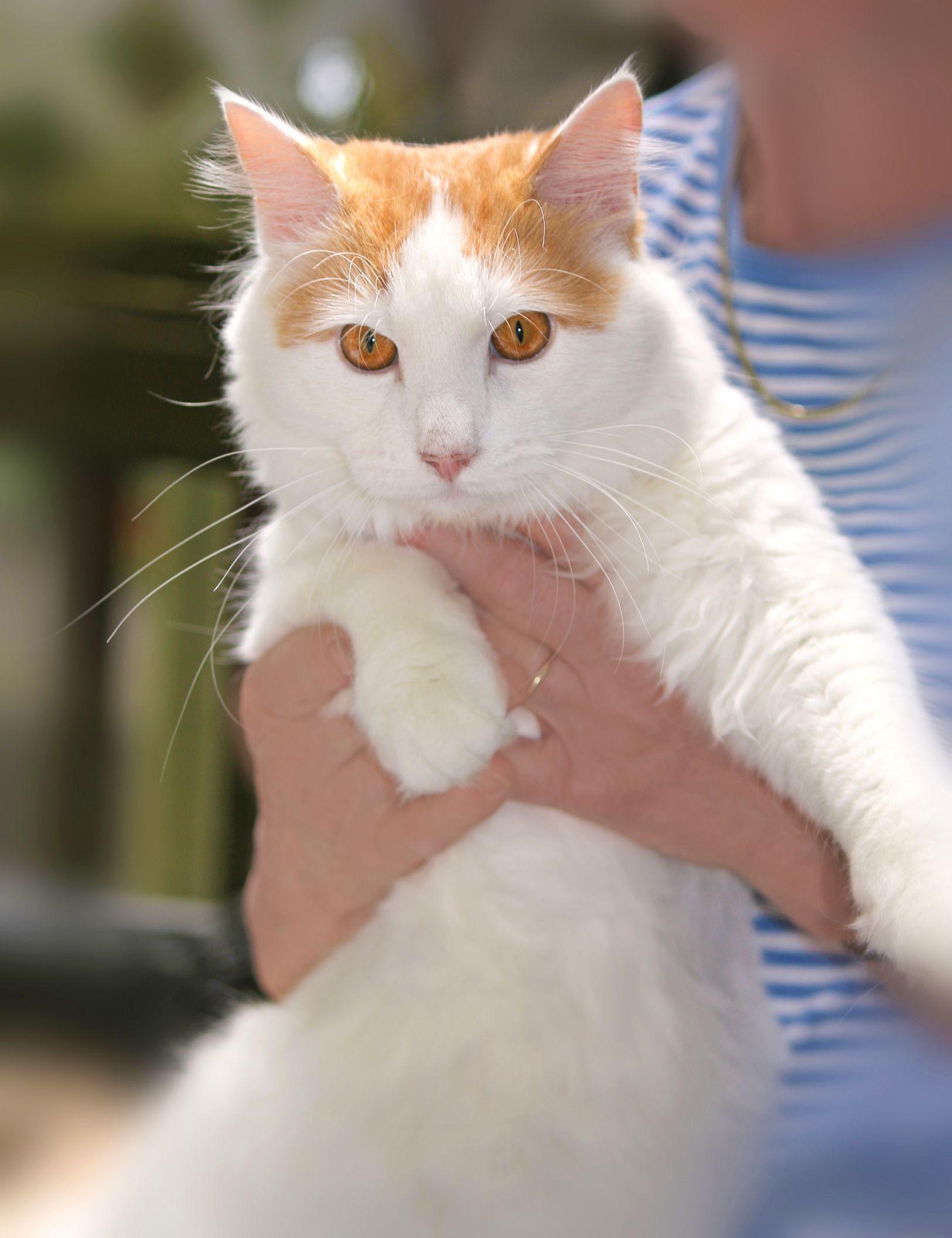 Adopt Chance on Cats, Animals, Adoption