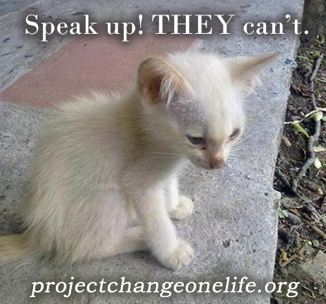 Caring for feral cats is such a simple thing but is so rewarding!