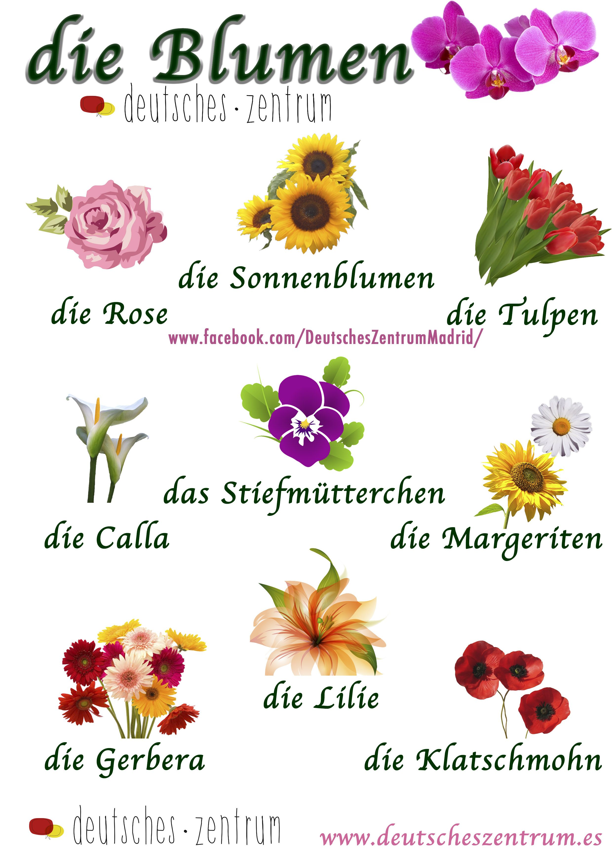 Blumen Deutsch Wortschatz Grammatik Alemán German DAF ...