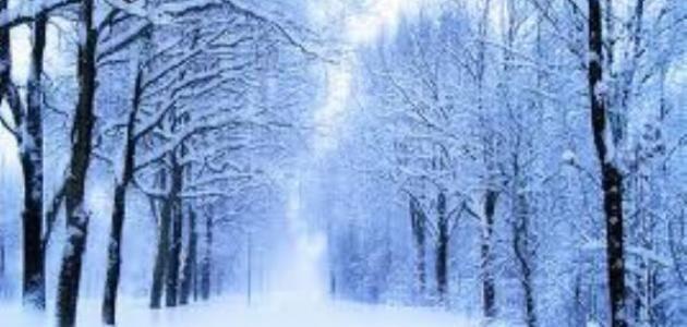 نتيجة بحث الصور عن صور فصل الشتاء لغتي الصف الرابع Winter Snow Outdoor